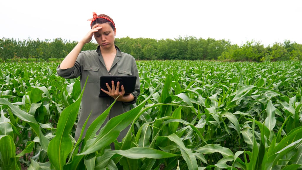 Woman holding a laptop in the field