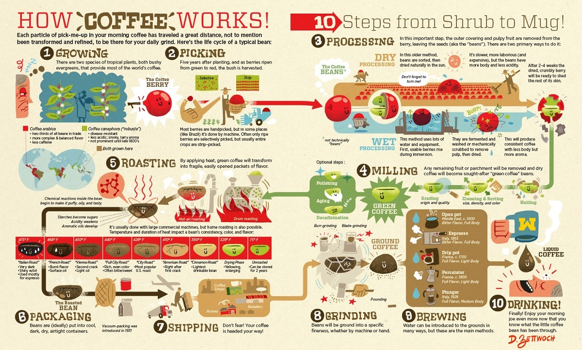 infographic of coffee supply chain