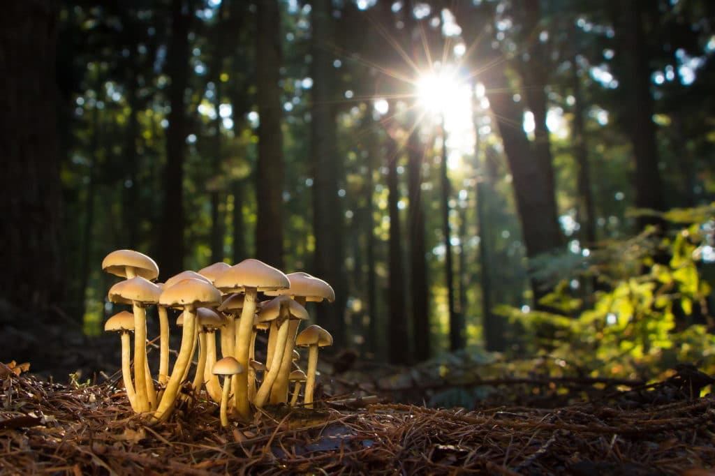Image of growing mushrooms in the forest