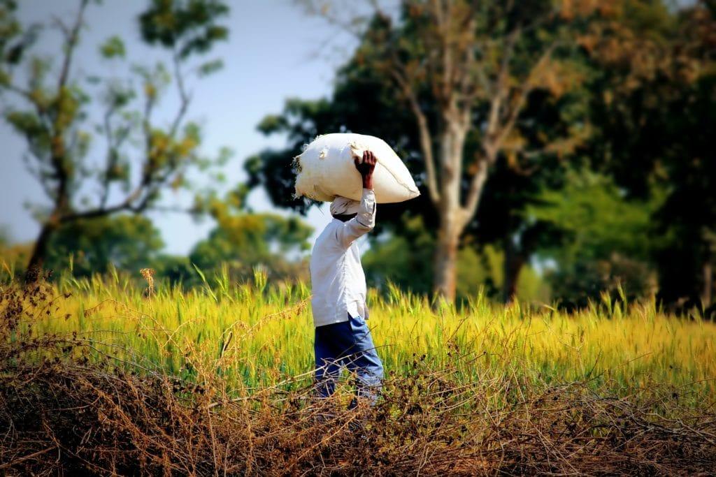 Small farmer in the field