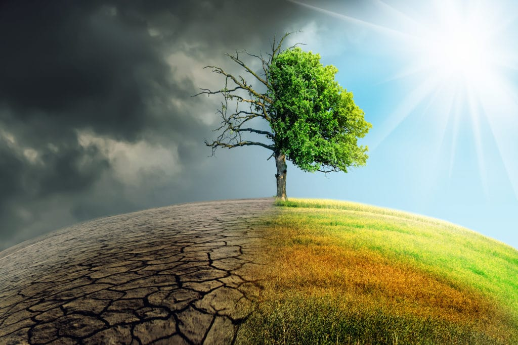 Image of climate change withered earth